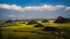 Rape Flower Field in Luoping, Yunnan, China (Kobe Jiang) Tags: