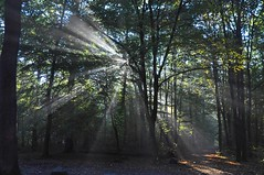 good morning sunshine (friedrichfrank1966) Tags: sonnenstrahlen sunshine morgen morning trees wald forest bume licht light availablelight outdoor nature natur colors farben