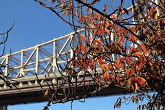 Autumn Colors, 59th Street Bridge (Roosevelt Island/NYC) (chedpics) Tags: newyork rooseveltisland queensboroughbridge