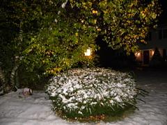 Snowy October (Zeyn1111) Tags: fall snow october albanyny