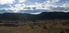 (jucreative) Tags: wild horses nikon d7000 alberta kanada canada ab wildhorses nature rockymountains rockies