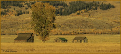 Peaceful Evening Homestead - Jackson Hole (wallawallaswede) Tags: antelope grizzly oxbowbend barns sheepelk
