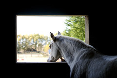 Cheval blanc (mohamed-adda) Tags: horse sony aplha 7 objectif 50 mm 18