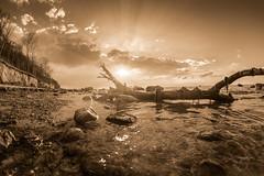 Poel_sepia (trx_850) Tags: poel island sepia summer sunset rays sunrays tree coastline rotten cliff fisheye walimex