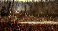 On The Road To Golden Pond (Wes Iversen) Tags: htt indianspringsmetropark michigan nikkor18300mm texturaltuesday whitelake automobiles cars grasses nature ponds prairie reflections tallgrassprairie trees water