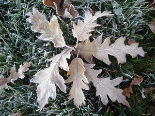 six leaves