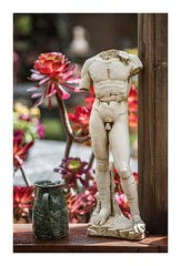 """""""Off With His Head' said the Queen of Red! (red stilletto) Tags: oceangrove oakdenewinery famousflickrfive succulent sculpture bellarinepeninsula jug pottery ceramics plant plants"""