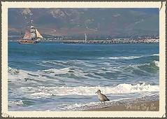 Seagulls and Tallships (Eyes Open To Life) Tags: tallship ocean water nature seagull bird shore sand shoreline mountains seascape