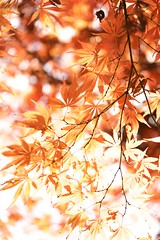 DSC06992 (@saka) Tags: autoupload leaves 481490 flowers 42004204