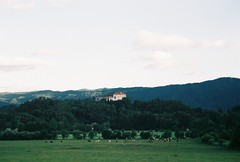 (ursa.b) Tags: bled slovenia field green grass nature outside summer castle cows