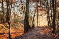 Autumn Walk (snomanda) Tags: landscape trees tree blue shadow light lightrays cloud countryside crepuscular hardlight rays sunrays morning dawn sunrise sunup daybreak outdoor