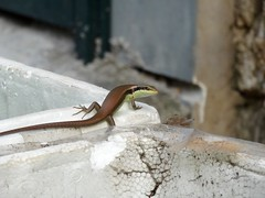 Looking back (program monkey) Tags: vietnam hanoi hadong back container garden styrofoam lizard