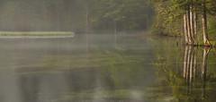 Reflections Schiederweiher (karlmayer56) Tags: nature fog mist landscape trees arboles reflections water lake upperaustria