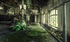 greenfeel (Nils Grudzielski) Tags: lostplaces abandonedplaces urbanexploration verlasseneorte green naturemystic nature indoor ruin rotten industrie decay canon 5dm2 5dmark2 fabrik forgotten