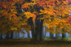 The Overlord (albert dros) Tags: grass autumn fooliage dolomites colours tree travel forest spooky overlord italy fog albertdros yellow mystery mist