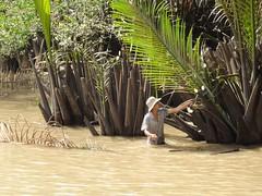 IMG_3337 (program monkey) Tags: vietnam mekong river delta cargo boat ben tre tra vinh palm tree machete half submerged emergent