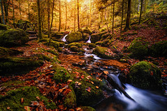Little Waterfalls in the Black Forest (kevingomes1) Tags: autumn yellow trees leaves red forest black water river tree bridge stream rocks beautiful colors fall green wood leafs germany waterfall falls long exposure moss waterfalls badenwrttemberg bhlertal gertelbachflle sonyalpha landscape woods sun