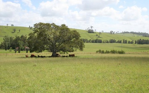 Lot 11 Hanleys Creek Road, Dungog NSW 2420