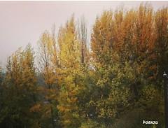 Paleta de otoño (Doenjo) Tags: sannicolasdelpuerto sierranorte instagram 2016 huaweigx8 sannicolásdelpuerto