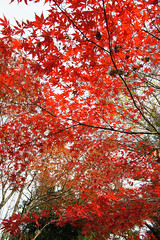 20161204-DS7_6483.jpg (d3_plus) Tags:  a05 wideangle d700 thesedays  architecturalstructure   kanagawapref   sky park autumnfoliage  japan   autumn superwideangle dailyphoto nikon tamronspaf1735mmf284dild  street daily  architectural  fall tamronspaf1735mmf284dildaspherical touring streetphoto  nikond700 tamronspaf1735mmf284 scenery building nature   tamron1735   tamronspaf1735mmf284dildasphericalif   autumnleaves