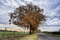 Cheshire oak (katatomicuk) Tags: 92365 oak cheshire
