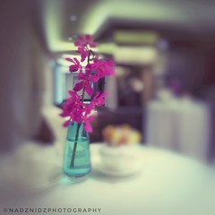 _47/52_orchids_ (NadzNidzPhotography) Tags: purple pink nature flowers flower hues blur scenery design art project52 52weeks project52weeks iphone iphone5s iphonephotography nadznidzphotography snapseed stilllife