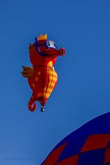 Balloon Fiesta 2016 | Neptuno | Morning Ascension, 07:04AM (Facundity) Tags: albuquerqueinternationalballoonfiesta aibf balloonfiesta2016 hotairballoons neptuno albuquerque newmexico snorkel specialshapesrodeo morningascension canon5dmkiv ef70200mmf4lisusm