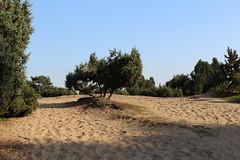 Heidesand (Sven Bonorden) Tags: heide sand westrup datteln ruhrgebiet nordrheinwestfalen