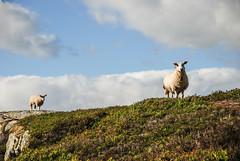 Kjerag (Karol Majewski) Tags: norway clouds sheep fjord scandinavia landsacape rogaland lysefjord kjerag chmury ryfylke owce krajobraz norwegia skandynawia