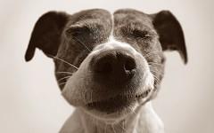 gerti (odish3) Tags: dog dogs gertie batdog dogbat