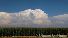 August 12, 2015 - Thunderstorms boom beyond a corn field in Mead.  (Brigette Rodriguez)