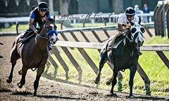 (EASY GOER) Tags: summer horses horse ny newyork sports beauty race canon athletics track saratoga competition upstate running racing 5d athletes races spa thoroughbred equine thoroughbreds markiii