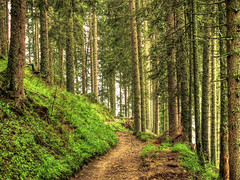 Hiking in Fir Forest (Habub3) Tags: forest canon walking powershot fir wald schwarzwald wandern tannen g12 2015 habub3