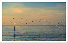 Seagulls Take Flight over Lake Michigan (sjb4photos) Tags: seagulls michigan lakemichigan saugatuck visipix