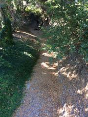 Permanente Creek, September (mamaladama) Tags: santaclaracountyca losaltosca heritageoakspark permanentecreek