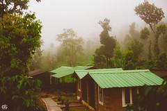IMG_6235 (athingcalledlife) Tags: blackandwhite india green art nature rain photography colours lush coorg virajpet vsco