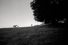 family portrait (Super G) Tags: trees blackandwhite bw film grass deer selfdeveloped kodaktmax100 olympusom4 zuiko28mmf28 d7695mins68d11 20150619om4tmax100