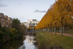 Floriade_251015_10 (Bellcaunion) Tags: park autumn fall nature zoetermeer rokkeveen florapark