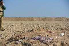DSC_9630 (sethfrantzman) Tags: people children seth women iraq graves fighters mass genocide kurdistan yezidi yazidi sinjar peshmerga ezidi yazidis shingal frantzman