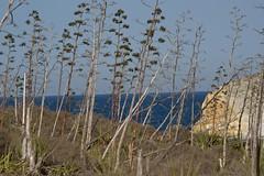 Pitas, acantilado y mar (AAcero) Tags: cabodegata genoveses