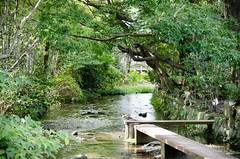 Genbe River (hisanori61) Tags: mishima japan shizuoka river genberiver nikon d7000 18200mm