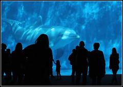 Acquario di Genova (Maulamb) Tags: acquario acquariodigenova delfino