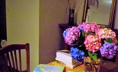 Cherchez le chat ! (Thanks for Explore !). (Grard Farenc (slowly back) !) Tags: chat cat flowers fleurs intrieur house maison chaise chair table bouquet hortensias books livres miroir mirror carte map wall mur blue bleu violet purple tommyandtuppence explore