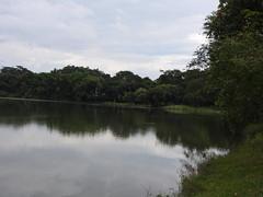 DSCN0344 (apacheizabel) Tags: lago pssaros rvores cu pinhas tronco espelho dgua queroquero rolinhas banco no bosque famlia de galinhas passeio parque centro aeroespacial da aeronutica cta so jos dos campos sp