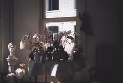 Friends (gabriel_90sflav) Tags: flowers sad sadness melancholia dream analogue analogic rollei xf 35 35mm 400iso smooth rad pastel daydream aesthetic vapor vaporwave lofi lomo cliche argentique lomography dope art glitch emotion sadgirl indie tumblr grunge home interieur inside indoor pov angel statut natural plants film kodak fuji rose pink tel