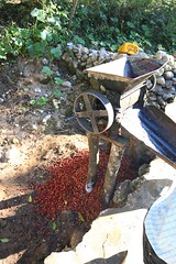 2016 Oct - coffee de-pulper (Foods Resource Bank) Tags: haiti caribbean coffee farmers men women pruning improved income humanitarian food security development charity hunger