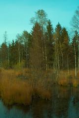 Filzen Moor Inzell (bartstoppe) Tags: filzen inzell bavaria bayern moor sony slta58 2885mm f3545 erlebnis pfad pflanzen und tiere hochmoor