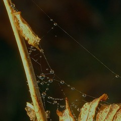 Wet wet web (stuant63) Tags: scotland kinclaven north wood forest perthshire
