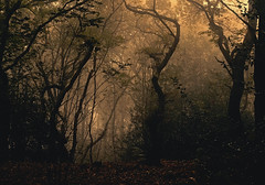 The woods are lovely, dark and deep (A child in the night) Tags: woods trees dark deep woodland theedge