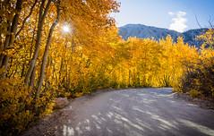 Summer's Last Breath (mrperry) Tags: easternsierra fallcolor fallcolors autumn northlake northlakeroad aspens sun sunburst road dirtroad inyocounty hwy395 highway395 centralcalifornia california